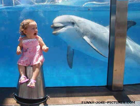 Funny Dolphin Scares Child Photo