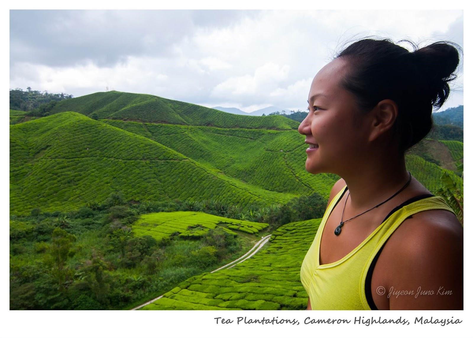 Tea Plantations in Cameron Highlands, Malaysia - www.runawayjuno.com www.rambleandwander.com