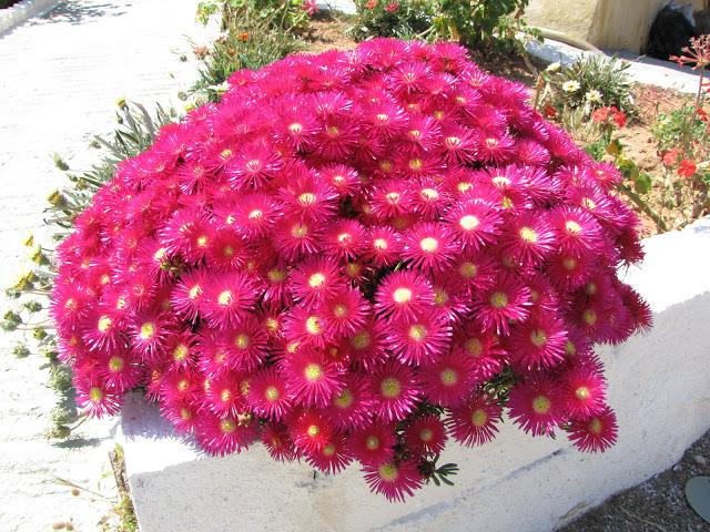 φωτογραφία με λουλούδια από την φύση την πρωτομαγιά