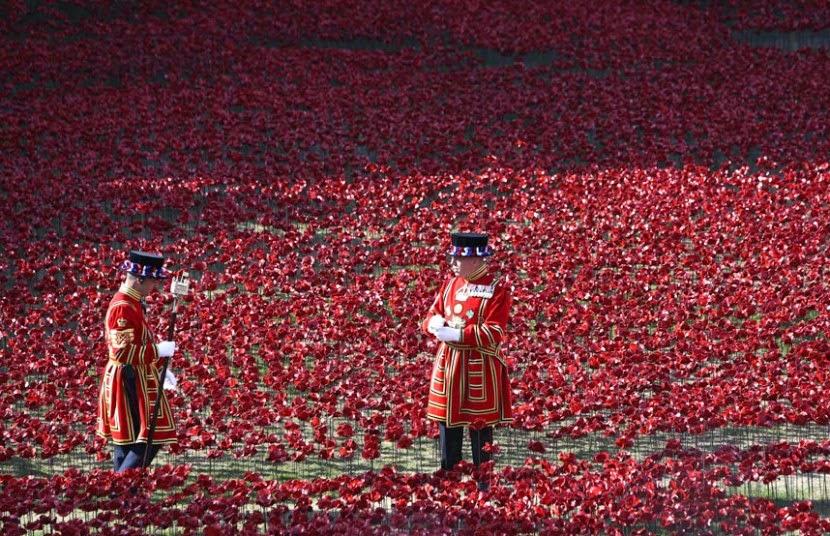 duc, duchesse, cambridge, Wapenstilstand, bloed, keramiek, herdenking, engeland, Eerste Wereldoorlog, bloemen, installatie, Londen, militair, Paul Cummins, papavers, papaver, Beeldhouwkunst, Tower of London, Verenigd Koninkrijk, WWI.,prins, zeevan rode poppies  ,Harry, GB,tour de Londres,eerste oorlog,14-18,