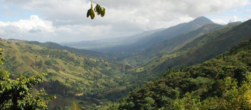 多明尼加咖啡最高海拔「中央山脈」產區︱全球絲路有限公司提供