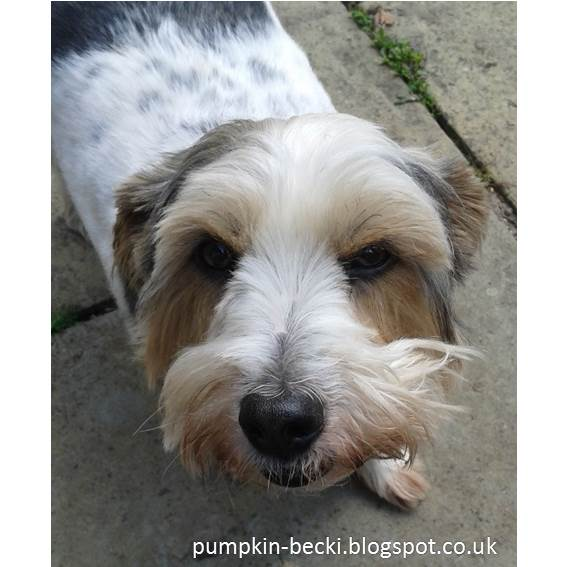 Tenants Stoneacre sweet little dog