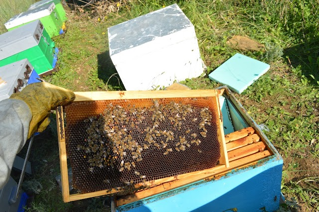 Άσχημα νέα για τη μελισσοκομία...