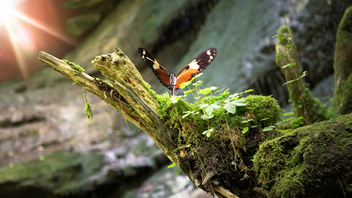 Wallpaper: Butterfly in Nature