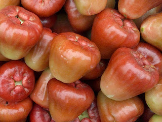 Wax Apple Fruit Pictures