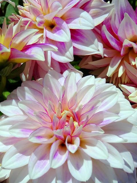 vaaleanpunainen, muoti, kauneus, asusteet, pukeutuminen, kukka, kukkia