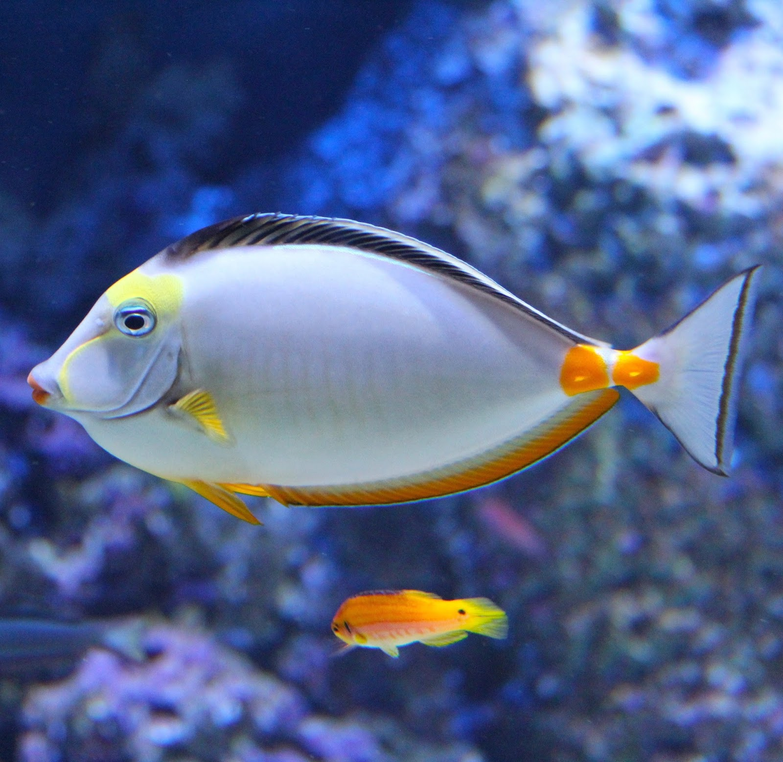 A very beautiful and colorful fish