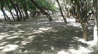 Чистый берег реки Болда в Астрахани
