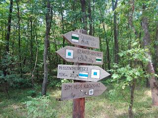 kirándulás, tippek, tanácsok, túratippek, erdőjárás, erdő, termszetjárás, természet, pilis, som hegyi, pilisszentkereszt