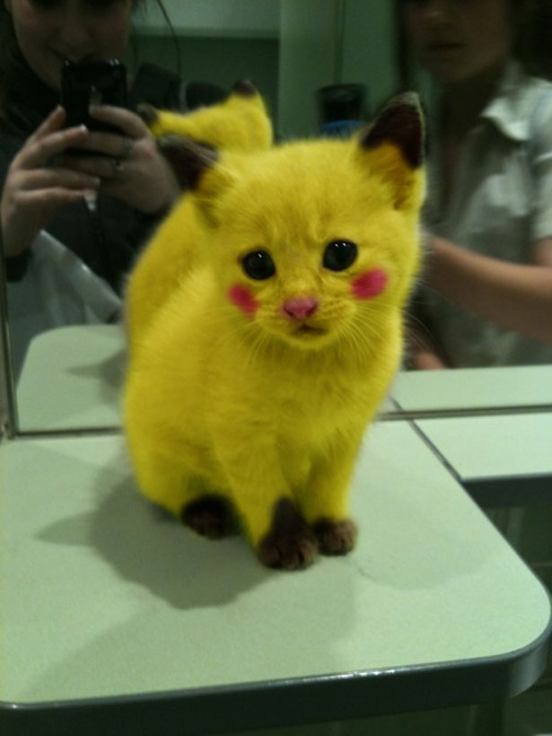 Painted Baby Kitten Pikachu