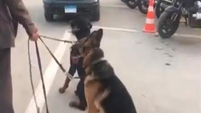 السجن 7 سنوات والغرامة عقوبة مالك كلاب مدينتي
