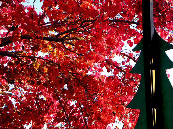 Leafy branch of red with silhouette of Christmas tree on lamppost