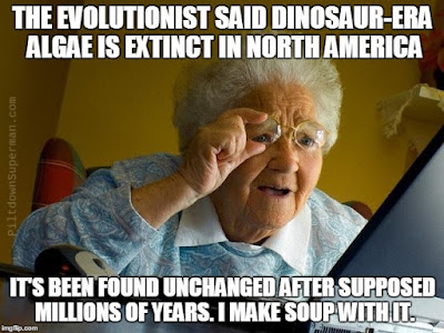Dinosaur-era algae supposedly extinct in North America for long ages has been discovered, and it is unchanged