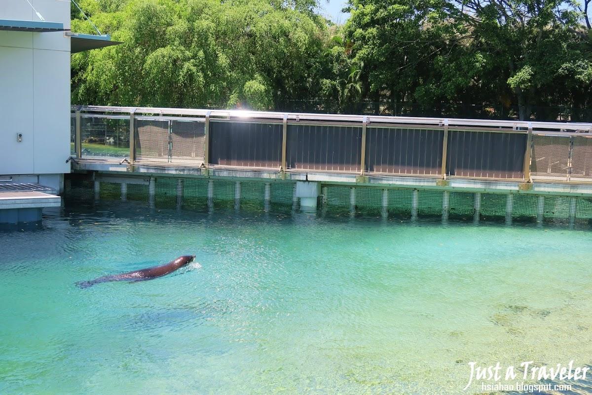 黃金海岸-景點-推薦-海洋世界-Sea-World-黃金海岸套票-旅遊-自由行-澳洲-Gold-Coast-theme-park-Australia