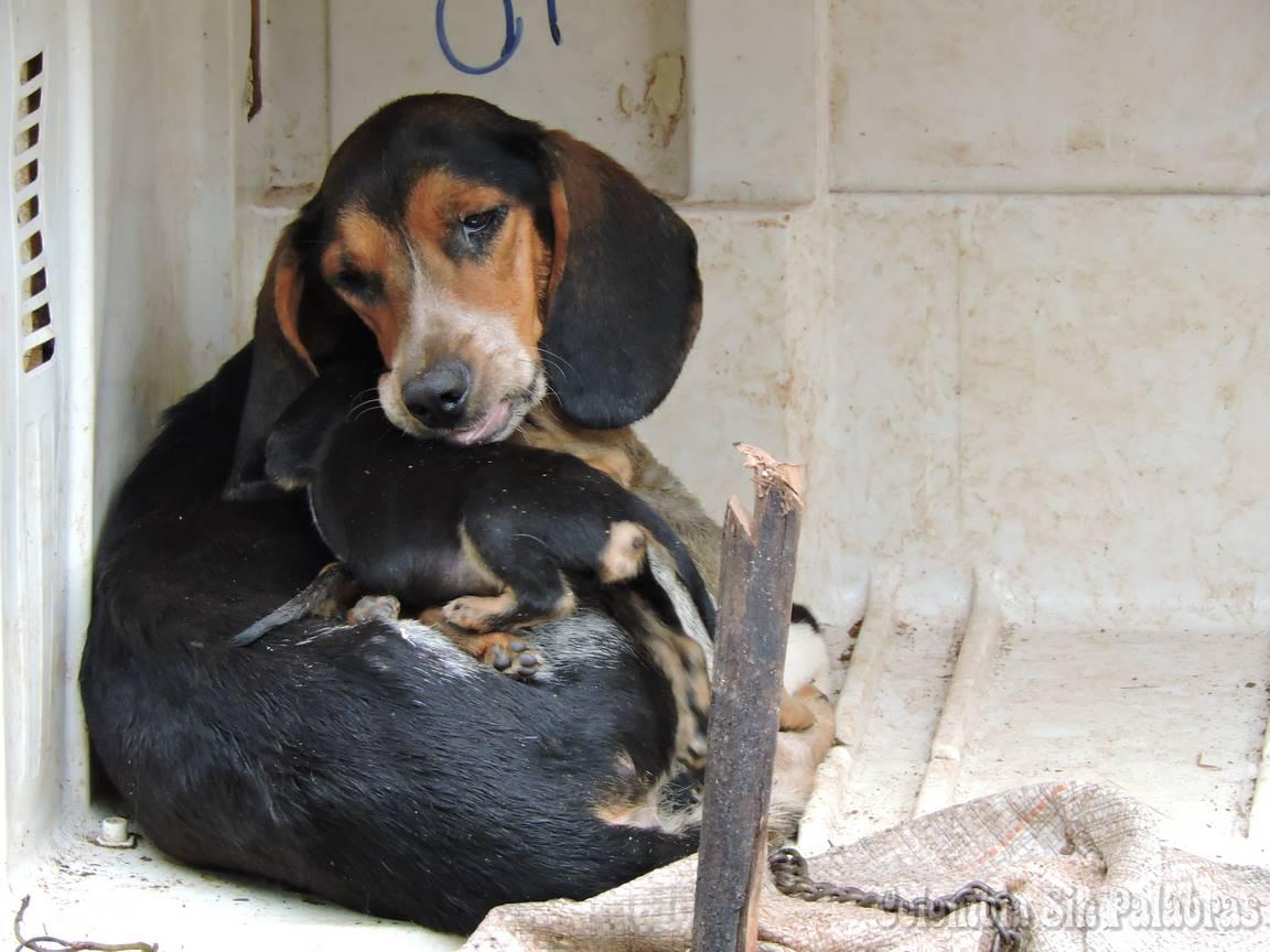 perra y cachorritos pequeños criandolos