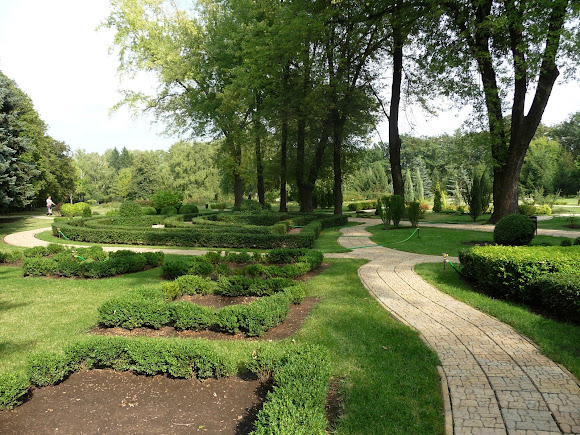 Донецьк. Ботанічний сад. Топіар