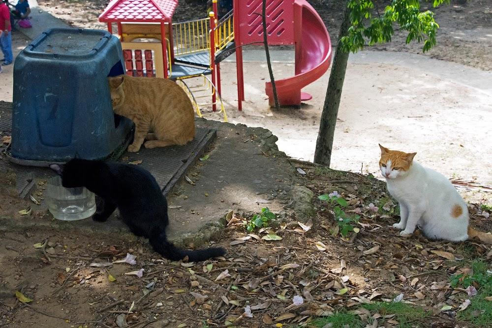 san juan cats