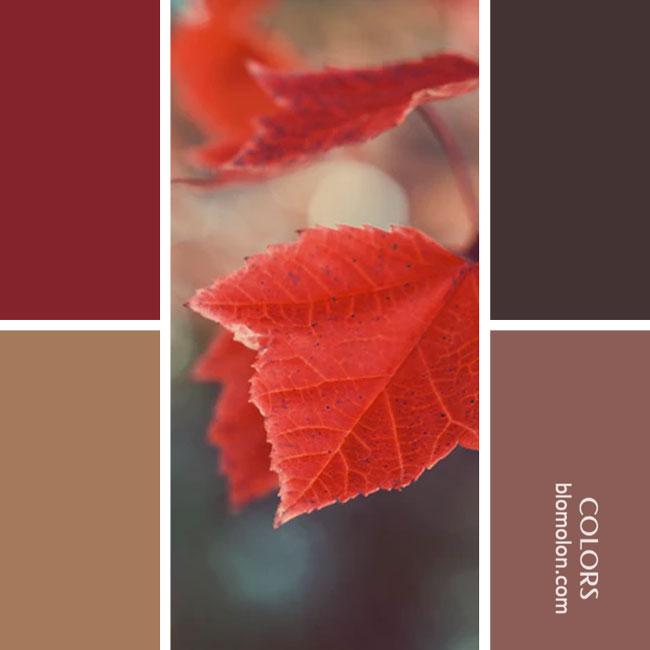 variedad_en_color_combinacion_38