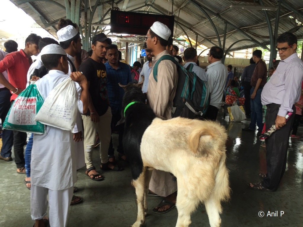 Windy Skies: Bakra Eid And Kota Goat