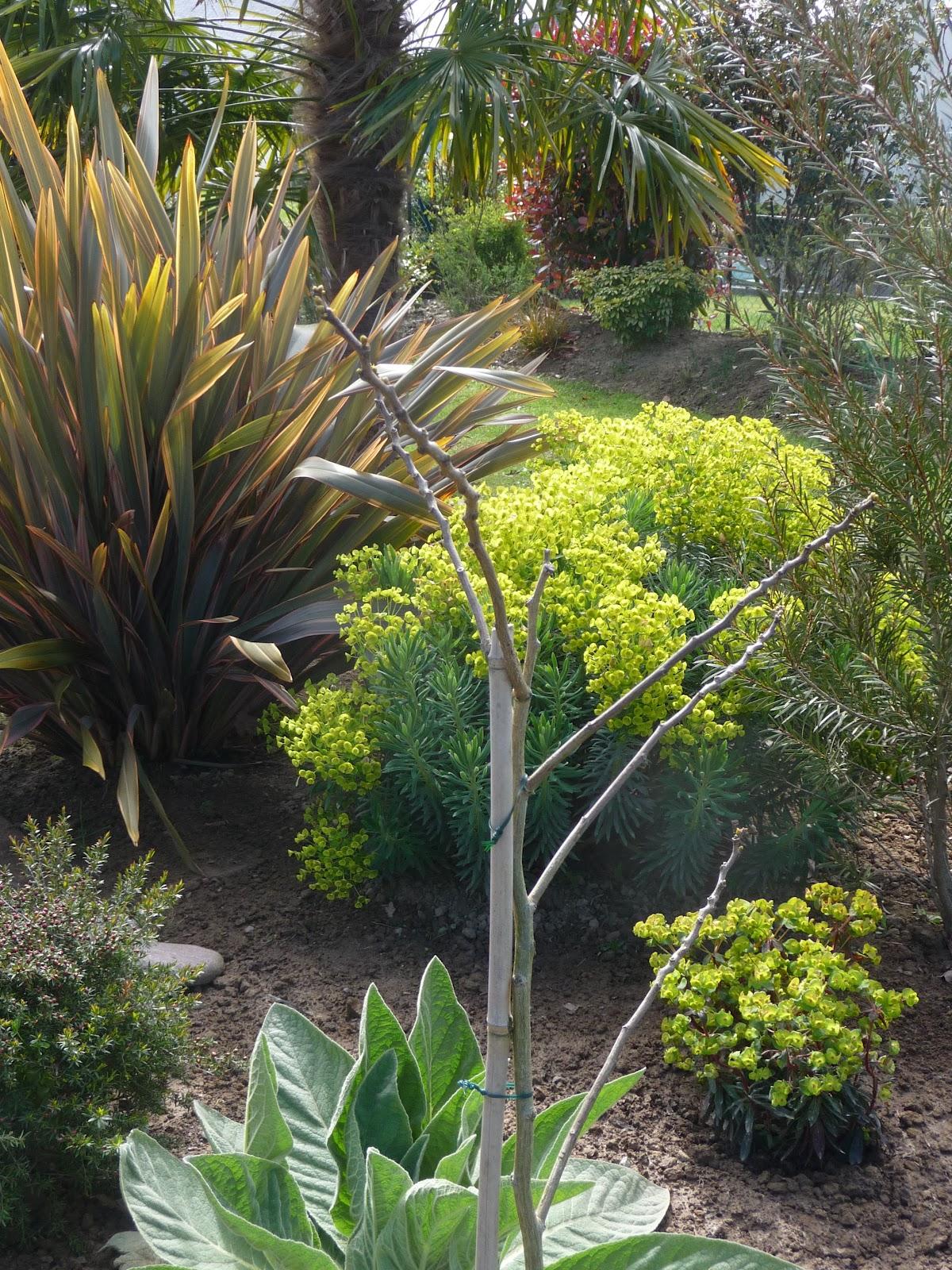 ma terre de bruy re plantations de la terrasse massif n 3. Black Bedroom Furniture Sets. Home Design Ideas