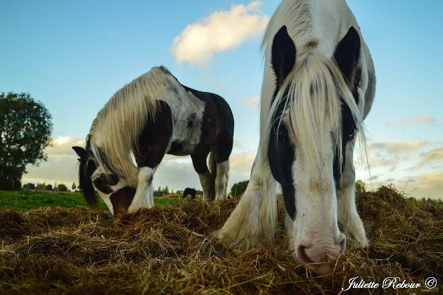 Rando à cheval en Normandie