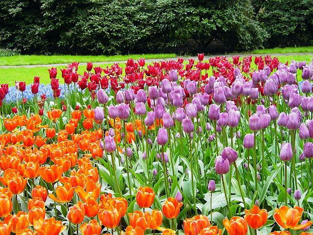 Avenida de los Tulipanes en Keukenhof