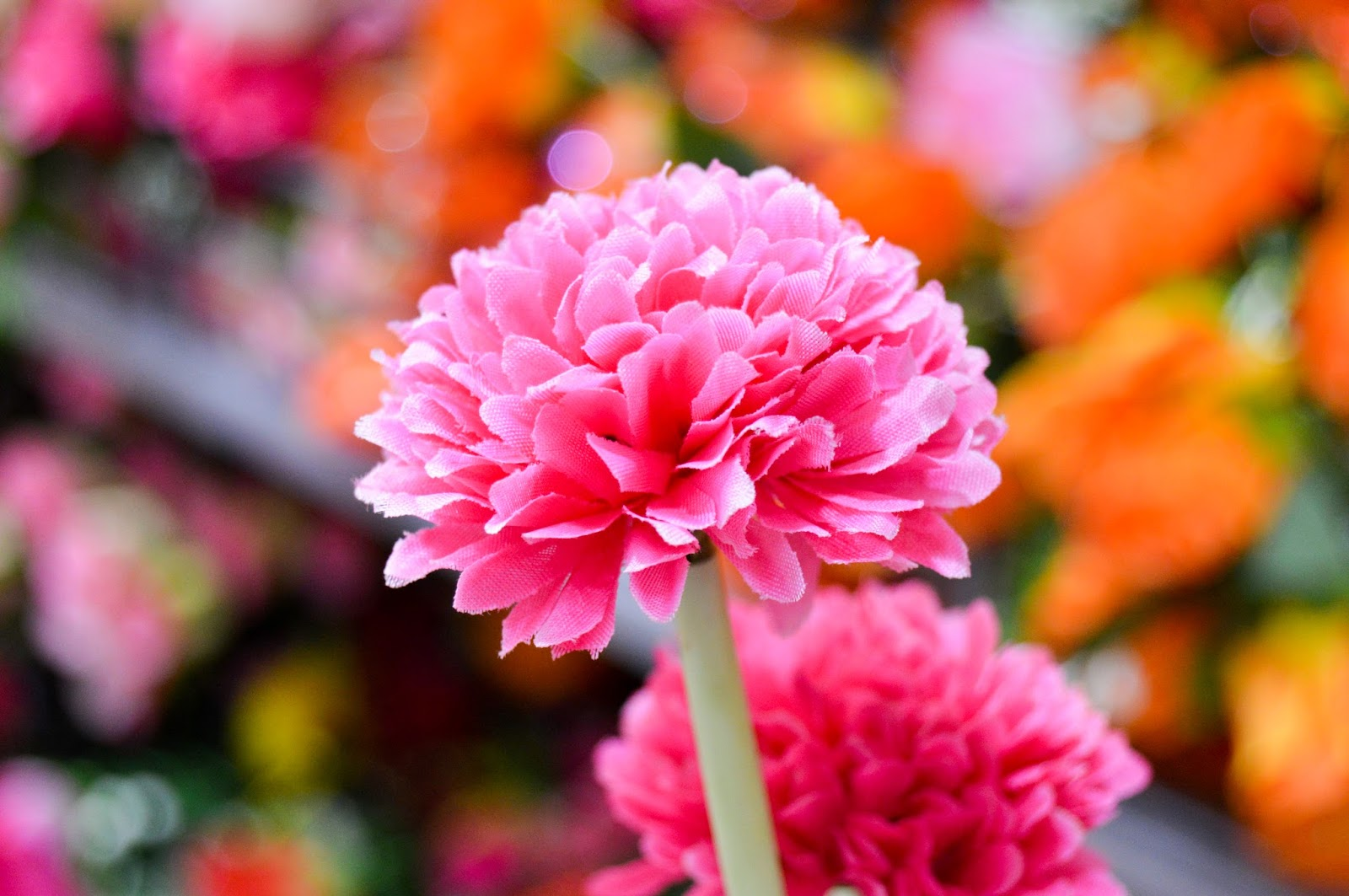 Beautiful Pink Flower Free Stock Photos & Wallpapers