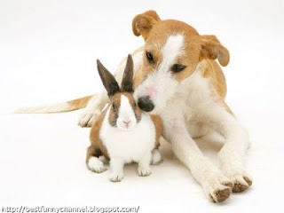Cute bunny and dog.