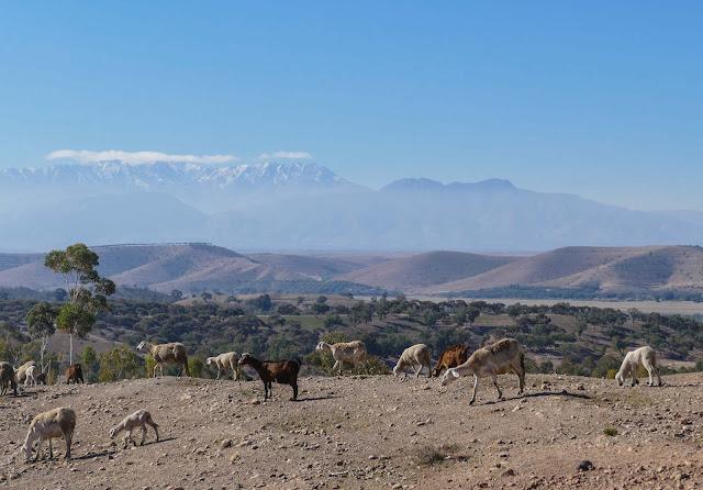 Agafay Desert Tour