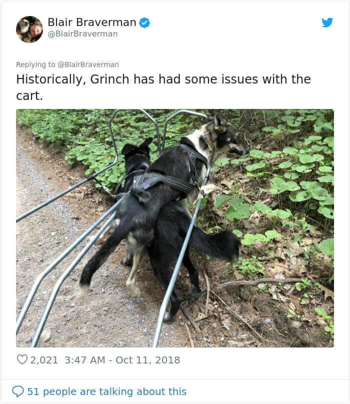Woman Shares How Her Adorable But 'Dumb As A Box Of Rocks' Sled Dog Took Her Home