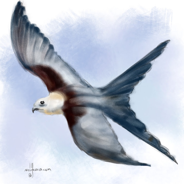 Swift-tailed kite bird painting by Artmagenta