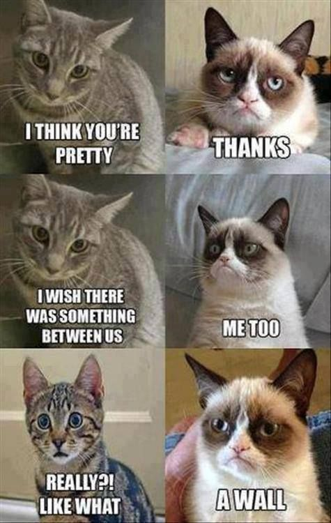 serious cats making funny expression memes