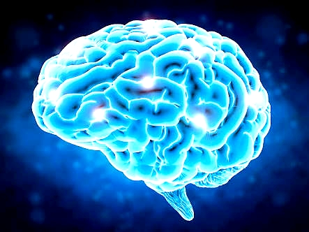 Human brain,Brain functions,Parts of the brain,Brain,Brain diagram, Brain cell