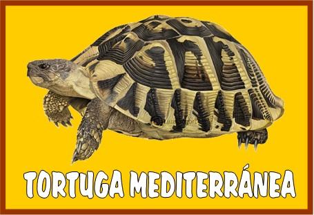 La clase de Laura Tipos de tortugas