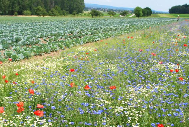 Mehr Biodiversität auf Knospe-Betrieben