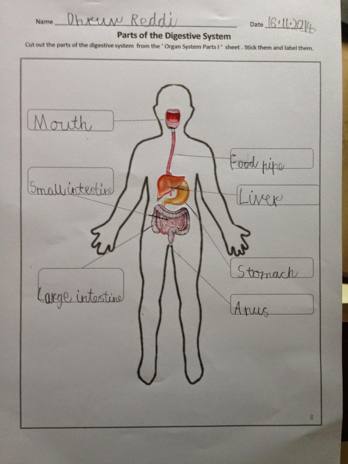 medium resolution of Happy Learners: Human Body Organ Systems