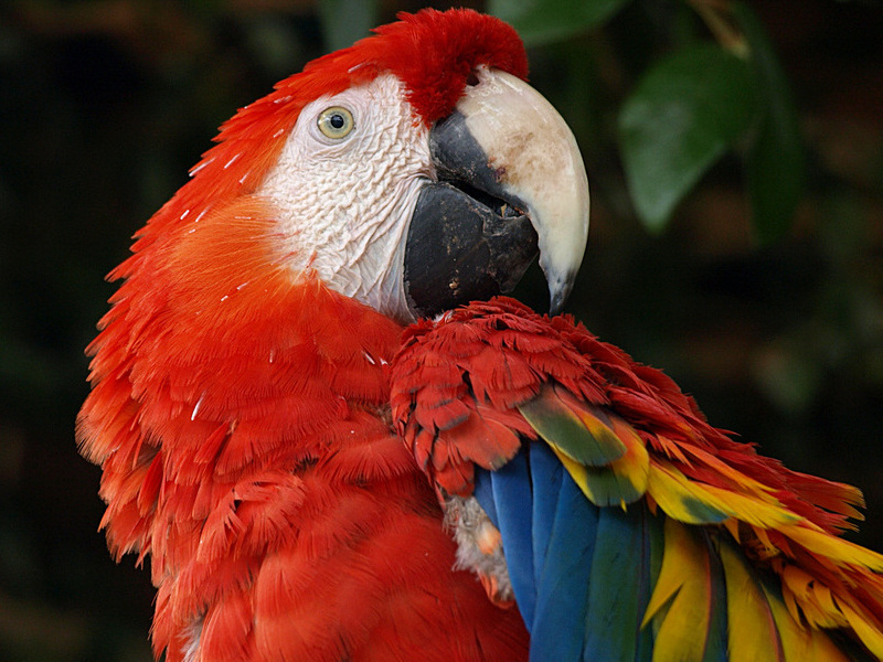 Tropical Rainforest Biome Animals And Plants