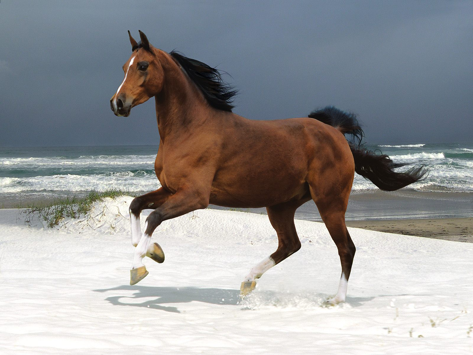 Horse On The Snow Facts And Pictures All Wildlife