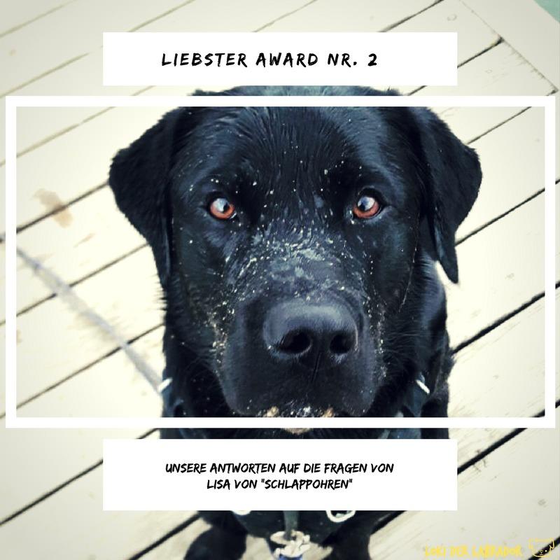 Liebster Award Loki der Labrador Lisa Schlappohren