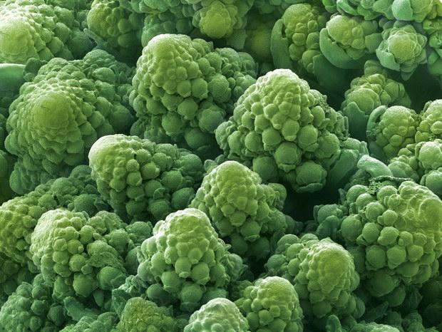 Không thể ngờ đây là các loại rau quả chúng ta ăn hàng ngày