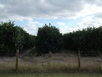 Naranjales