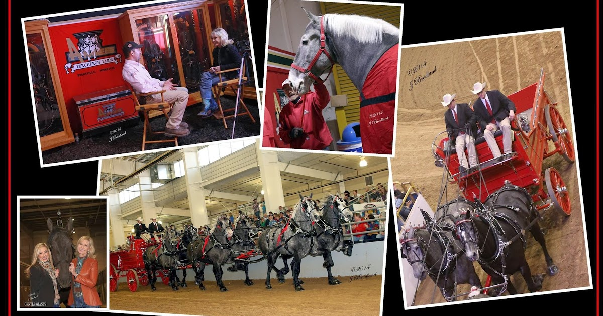Hunter Day Yukon >> Eaglesfield Percherons: Gentle Giants $100,000 Invitational North American Six Horse Hitch ...