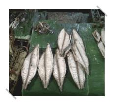 Pembelajaran yang Bisa Dipetik Dari Ikan Cue