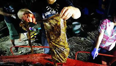 sampah plastik di perut ikan paus