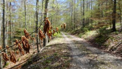 Frostschäden im Wald