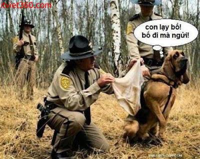 Những hình hài hước vui nhộn nhất, con chó ngửi đồ đánh hơi