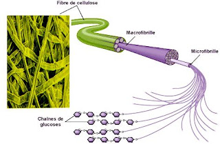 Définition Cellulose