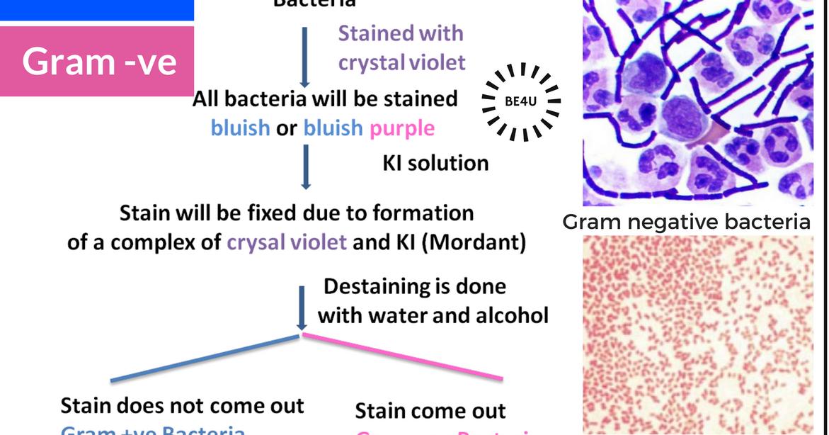Escherichia coli E coli Infections Background