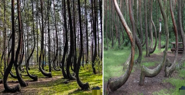 Mysterious Trees in The World