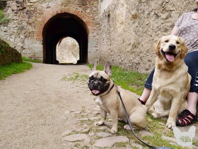 hrad kam můžou psi